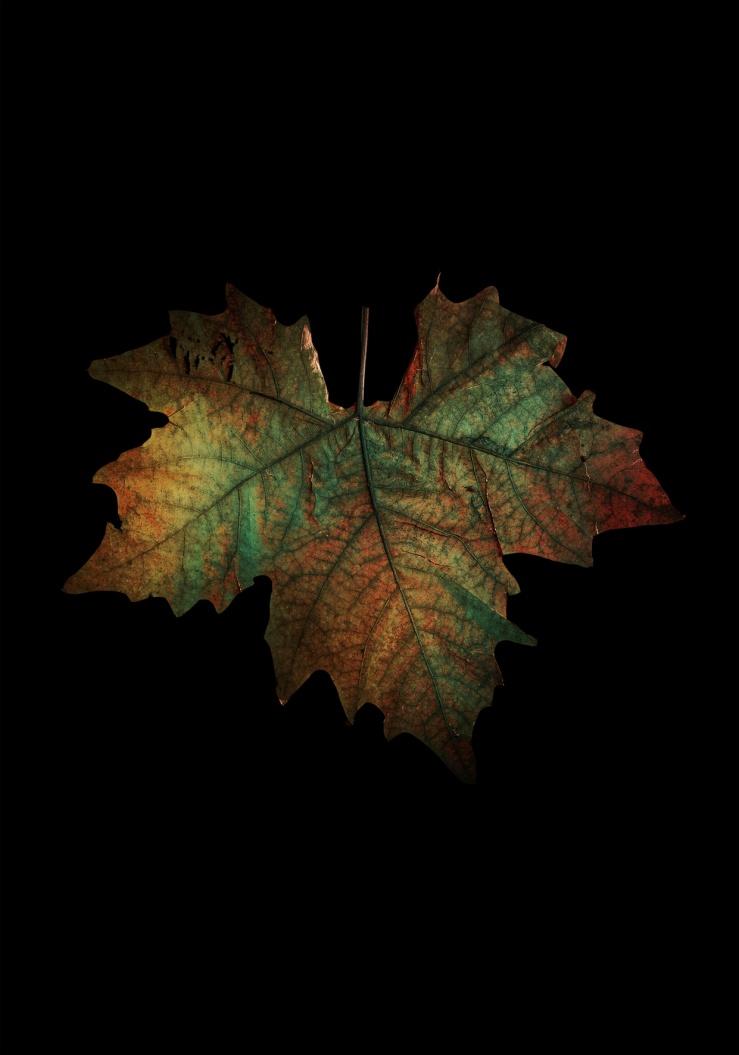 serena_vittorini_enlightening_surfaces_3